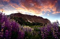 Gothic Mountain and lupines